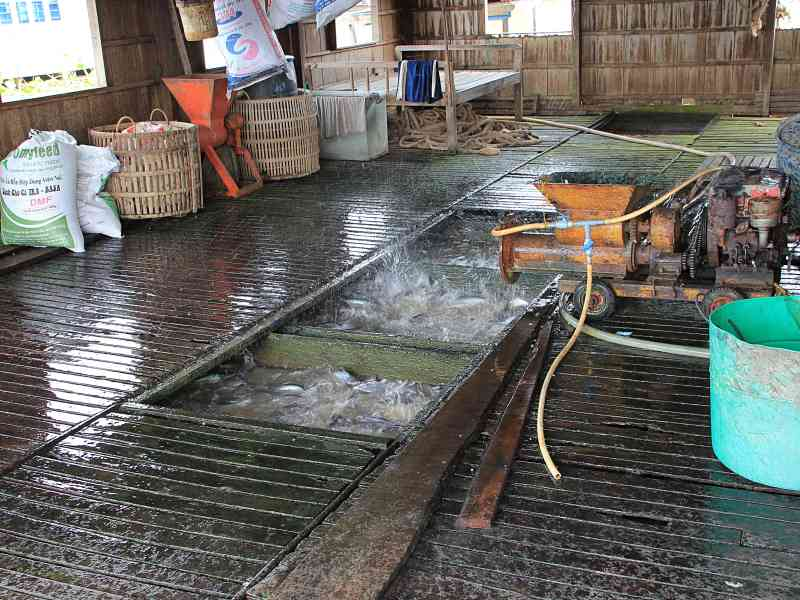 Visiting floating houses and fish farms mekong delta for Neighborhood fish farm