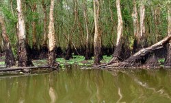 Ca Mau - Swamps, rivers and Mangrove forests