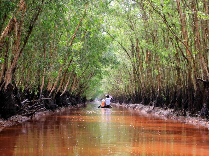 Tra Su Forest Mekong Delta Travel Guide